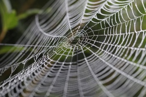 dipendenza da web
