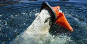 recupero della plastica dal mare